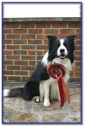 Blaze 3rd in Grade 1 Agility at Stour Valley