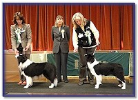 Blaze - Best In Show at Southern Border Collie Club Nov 2011