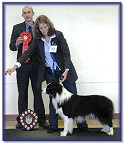 Blaze - Best In Show at Wessex BC Club Show 2009