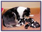 Bliss with her Newborns