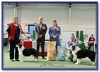 Bliss - Best Veteran In Show - Midlands BC Club 2013