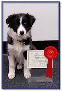 Bonny at 4 Months: 1st Place, Beginners Test