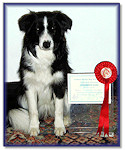 Bonny at 7 Months: 1st Place, Intermediate Test