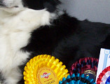 Brie Showing Off Her Ribbons
