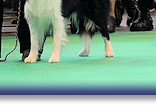 Rex VHC at Crufts 2015