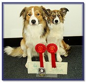 Teazle, 1st in the Beginners Obedience Test, with her big brother Dandy, 1st in the Advanced Obedience Test