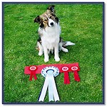 North West BC Club Res Best Puppy In Show