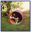 The Agility Tunnel - Willow