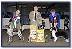 Res Best In Show at Romford & District 2012 - Age 16 Months